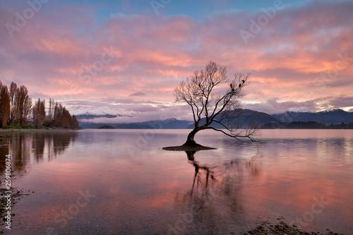 The iconic Wanaka Tree on Lake Wanaka at sunrise Canvas Print