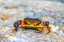 Crab On Sea Stones