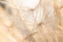 Sparkly Dandelion Micro Macro ...