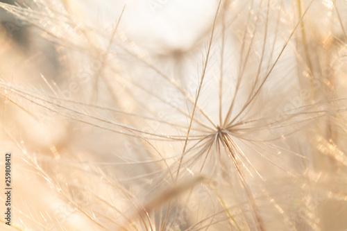 sparkly dandelion micro macro dandelion Fototapet