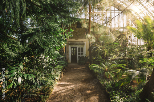 Canvas-taulu Dreamy landscape with exotic evergreen plants in greenhouse