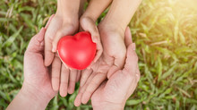 Red Heart In Family Hands On Green Grass Background, Adult And Child Hands Holding Red Heart, Health Care, Donate Family Insurance Concept, Earth Day Together Harmony Peaceful Concept.