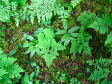 Rain Forest Floor