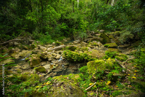 Wild Rainforest in Puerto Rico. Waterfall and river.