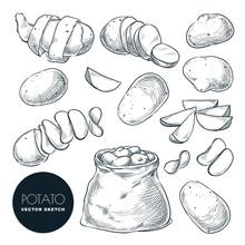 Potatoes Sketch Vector Illustr...