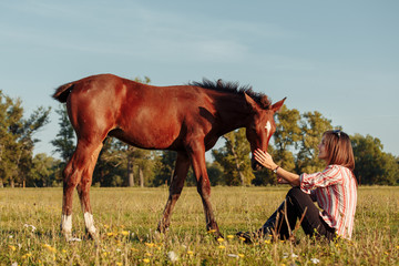 Woman is feeding a foal from her hands