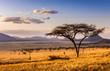 Sunset at savannah plains