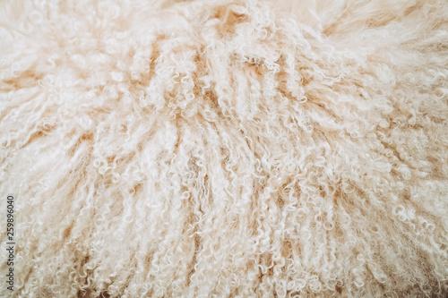 Photo  Arrière plan poils beige fourrure