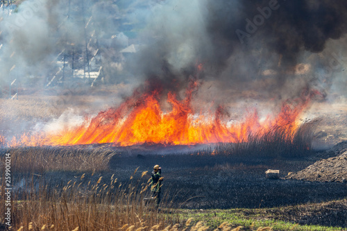 Foto auf Leinwand Grau Verkehrs Raging forest spring fires. Burning dry grass, reed along lake. Grass is burning in meadow. Ecological catastrophy. Fire and smoke destroy all life. Firefighters extinguish Big fire. Lot of smoke