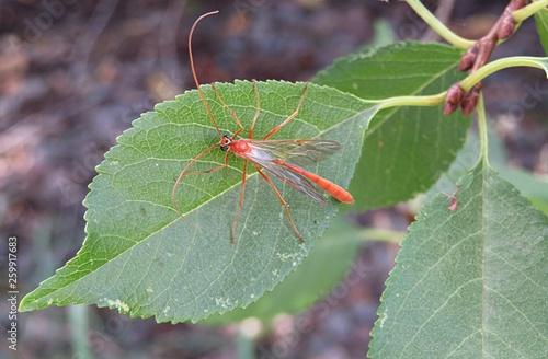 Fotografie, Obraz  Insect on green leaf
