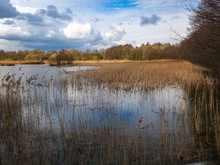Wetlands And Reeds At Potteric Carr, South Yorkshire, England