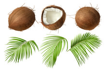 Coconut Realistic Vector Illus...