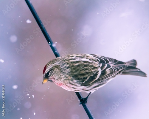 Photo  Sparrow bird perched