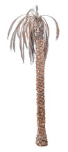 Dead Date Palm Tree Isolated