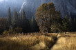 Morning sun illuminates colorful autumn foliage in Yosemite Valley, Yosemite National Park