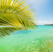 Palm tree and turquoise water in Sainte Anne shore
