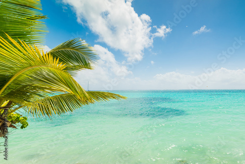 Foto op Canvas Eiland Turquoise water in Sainte Anne shore in Guadeloupe