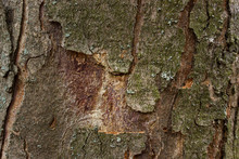 Wood Texture With Partially Pe...