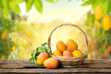 Mango Fruit In Weaving Basket On Wooden Table With Mango Tree In The Farm And Sunlight Background