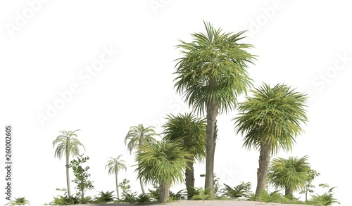 Fototapeta  Trees of the mesozoic era isolated on white background 3D illustration