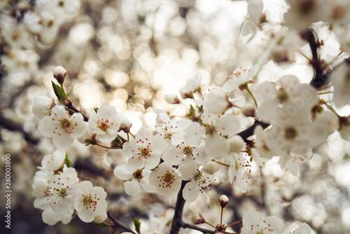 Wiosna rozkwitające kwiaty w słońcu - fototapety na wymiar