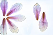 Magnolien Blüten Hell