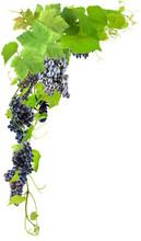 Grappes De Raisins Sur Fond Bl...