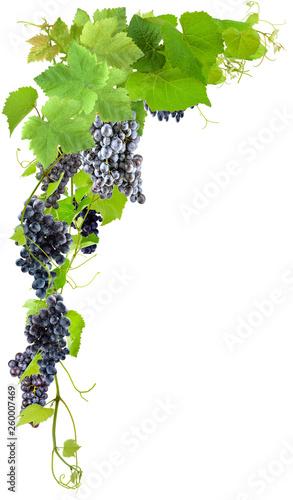 Grappes de raisins sur fond blanc  Fototapete