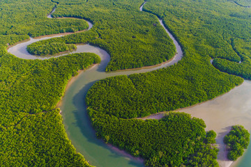 FototapetaAerial view green mangrove tropical forest swamp line to sea