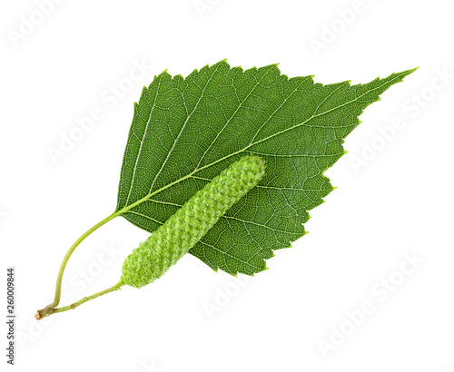 Fototapeta Leaf of the silver birch and catkin closeup on a white background