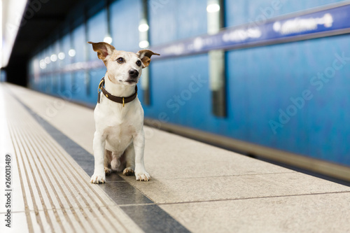 Spoed Foto op Canvas Crazy dog dog waiting for owner at rail train station