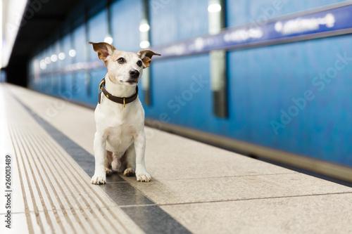 Poster Crazy dog dog waiting for owner at rail train station