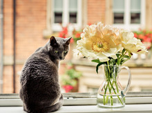 Cat In WIndow With Flowers