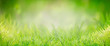 canvas print picture - Green grass background, banner. Summer or spring nature. Sunny day