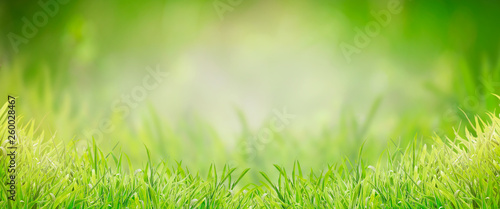 Poster Spring Green grass background, banner. Summer or spring nature. Sunny day