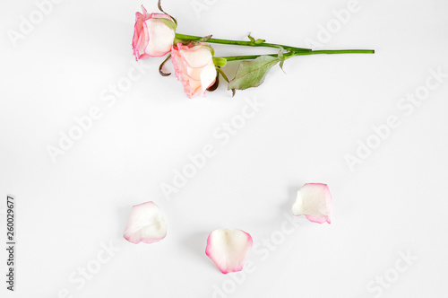 pink roses bunch and petals with empty space