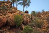 Fototapeta Sawanna - Elefant on a hill Tsavo West Kenya