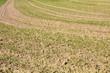 widok na pole z kiełkującym zbożem