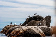 Two Seagulls On The Breakwater