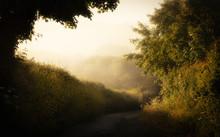 Feldweg Im Morgennebel Kurz Nach Sonnenaufgang In Cornwall