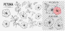 Set Of Petunoa Flowers. Hand Drawn Illustration Converted To Vector. Isolated