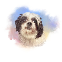 Portrait Of A Small Domestic Dog. Toy Or Miniature Poodle On Watercolor Background. Cute Puppy. Watercolor Hand Drawn Pet Illustration. Animal Art Collection: Dogs. Good For Print T Shirt, Pillow
