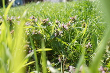 Grass, Green, Nature, Plant, Spring, Field, Summer, Meadow, Flower, Garden, Lawn, Flowers, Leaf, Dew, Natural, Flora, Season, Macro, Morning, Drop, Rain, Fresh,