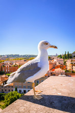 Sea Gull Bird Sitting Looking At The View Of The Roman Forum, Ancient Roman Ruins In Rome, Rome, Italy, Europe