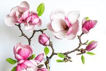 Beautiful Spring Magnolia Flowers. Holiday Or Wedding Background