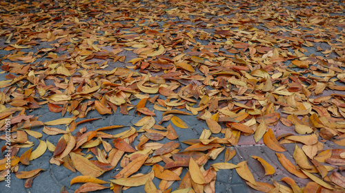 Foto  red, orange and yellow autumn dry leaves in ground for background