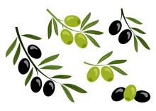 Set Of Black And Green Olives. Vector Illustration