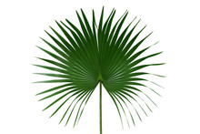 Palm With Circular Leaves Or F...