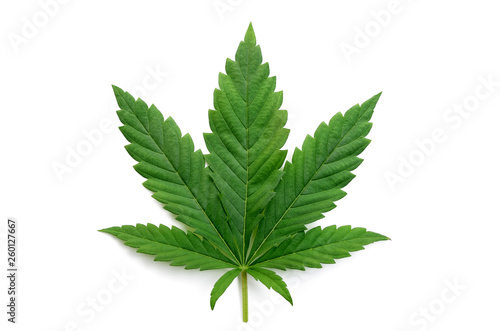 Green cannabis leaves isolated on white background Wallpaper Mural