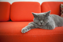 Relaxed Cat On A Sofa.